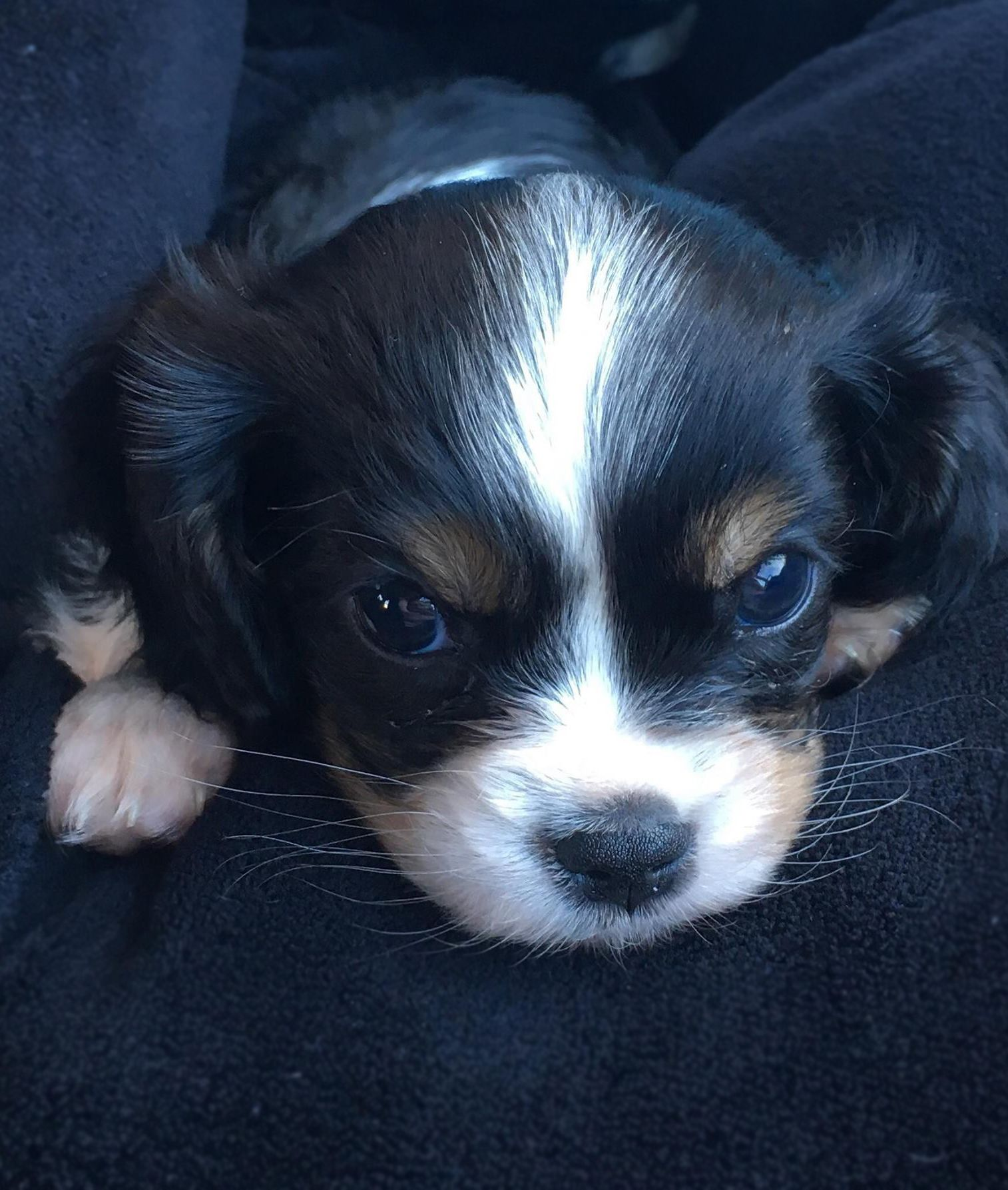 We have fallen in love with this puppy! This is