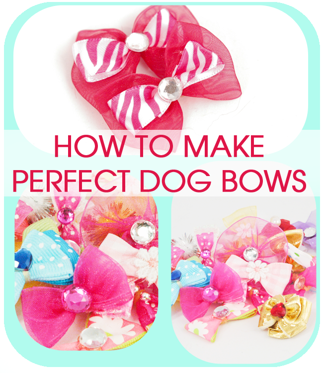 Perfect Dog Bows (Tip from a Professional Dog Groomer