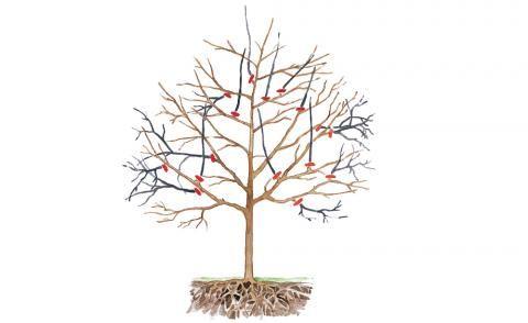 obstbaumschnitt grundlagen tipps und tricks obstbaumschnitt g rten und gepflegt. Black Bedroom Furniture Sets. Home Design Ideas