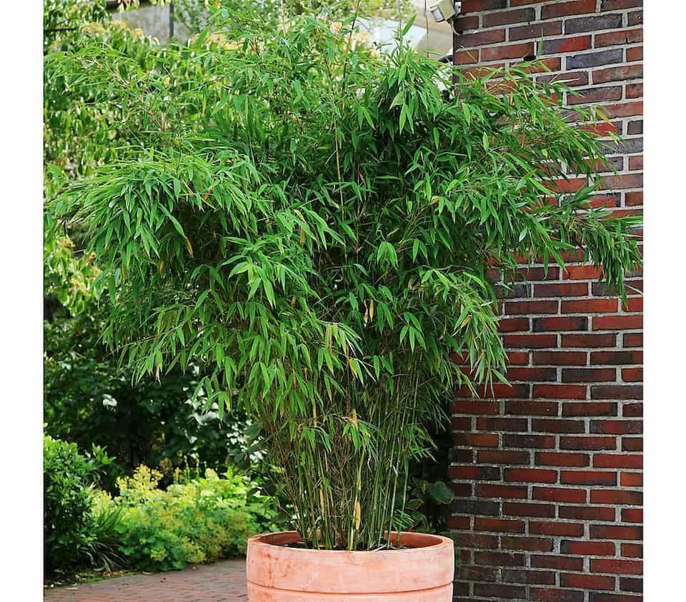 Schirm Bambus Jumbo Dehner Garten Center