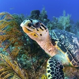 #MarineWeekSA: Do your bit for ocean conservation