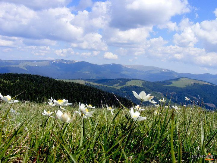 Romania, Latoritei Mountains, Southern Carpathians. From Romania / Postcards - Postales on fb.