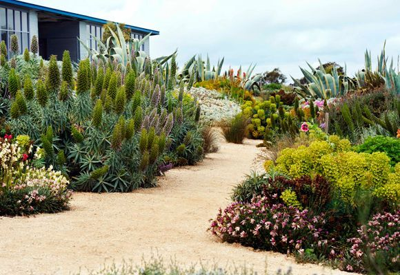 Native and or drought tolerant california plants for a for Garden design with native plants