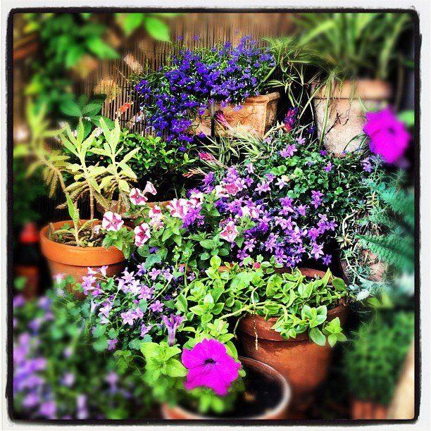 Little flower corner.
