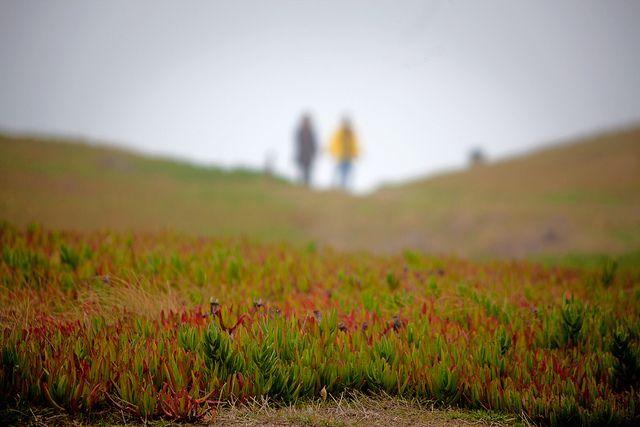 6 Fun Things to Do Near Half Moon Bay | Mill Rose Inn | Half Moon Bay, CA