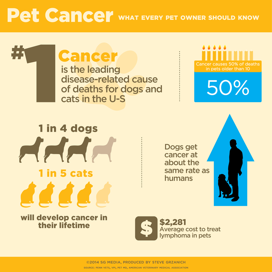 How To Address And Where To Check For Lumps And Bumps In Dogs Cats Healthcare For Pets Pet Cancer Pet Cancer Awareness World Cancer Day