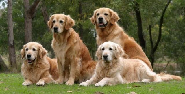 Hunderassen Fur Erstbesitzer Die Besten Ersten Hunde Hunderassen Hunde Rassen Und Hunde