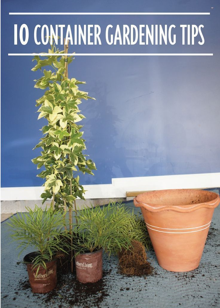Check out these 10 Container Gardening Tips to grow the best plants you can this fall!