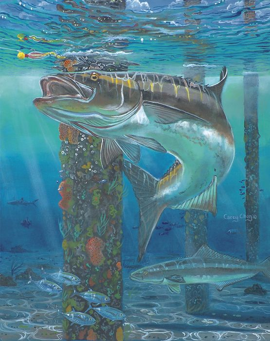Cobia the best tasting fish well one of the best in the for Best tasting fish