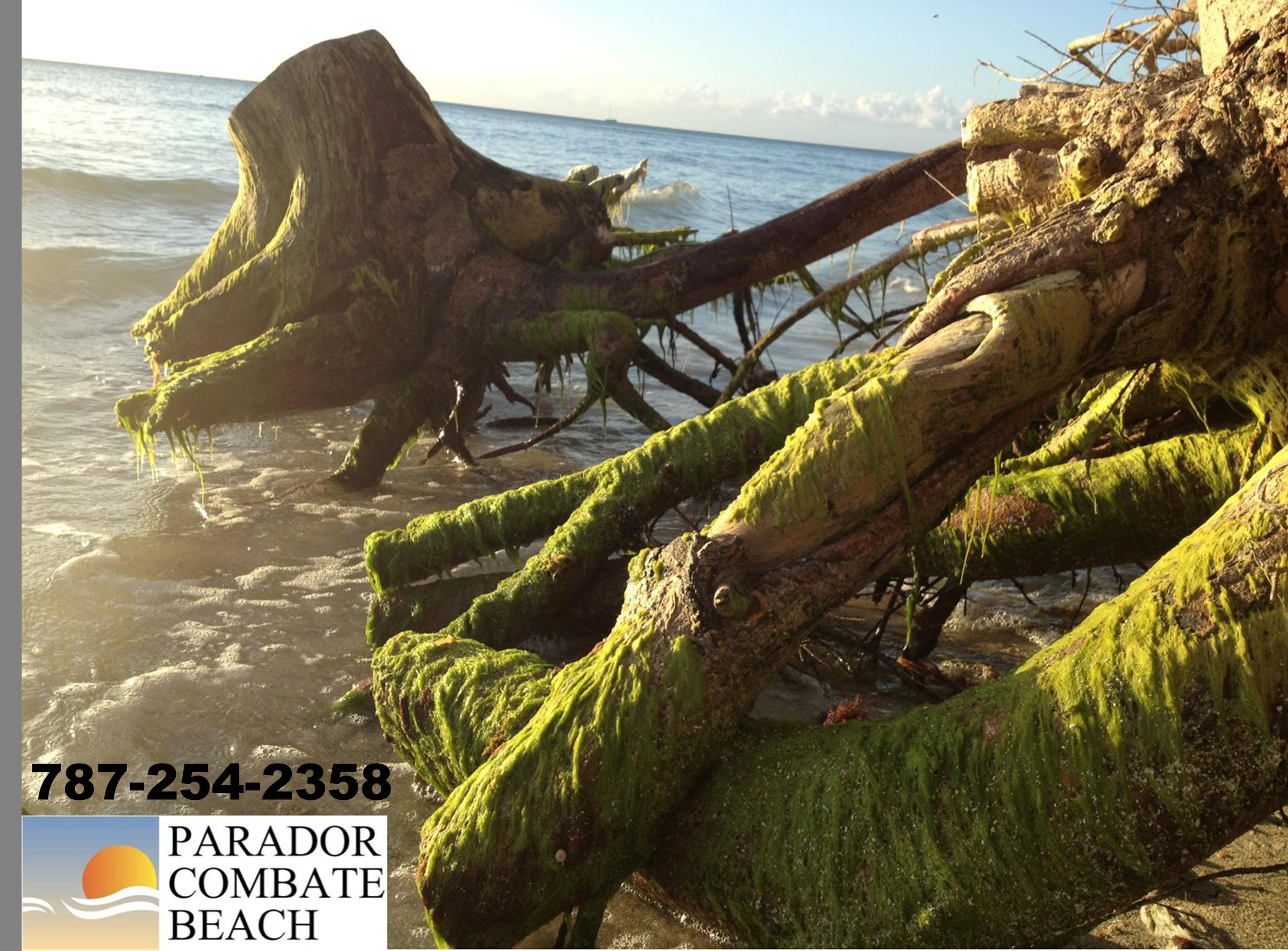 Caribbean Nature In Cabo Rojo Puerto Rico