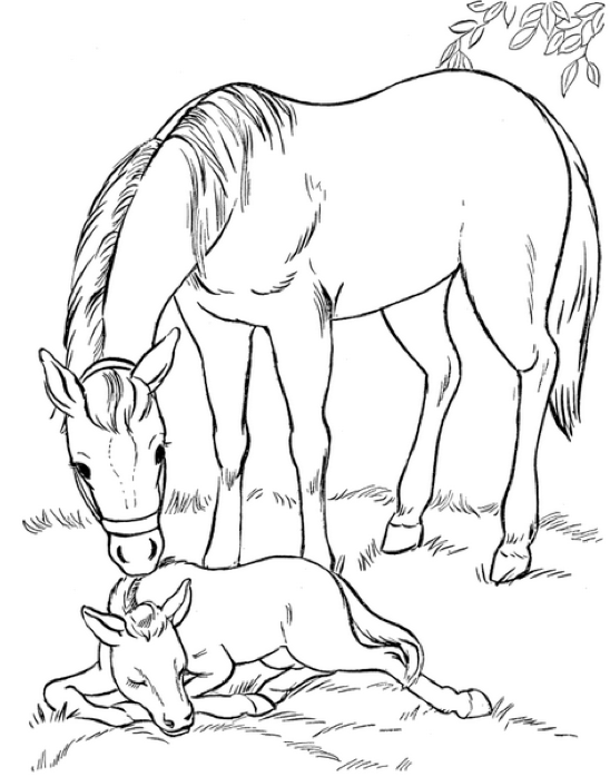 Print Coloring Page And Book Mare Foal For Kids