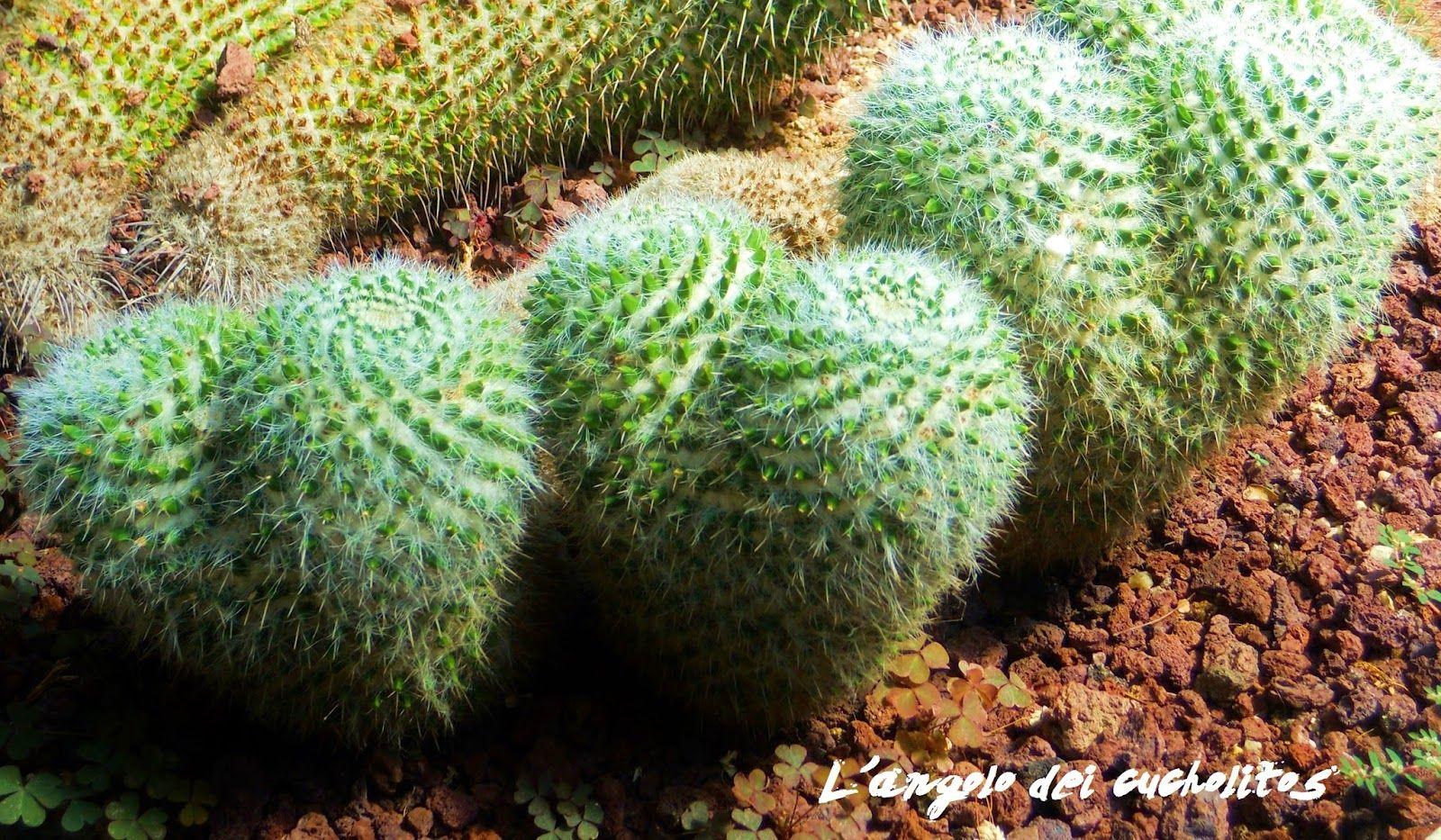 Real jardìn Botanico- Madrid L'angolo dei cucholitos