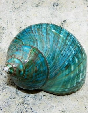 teal shell , from Iryna