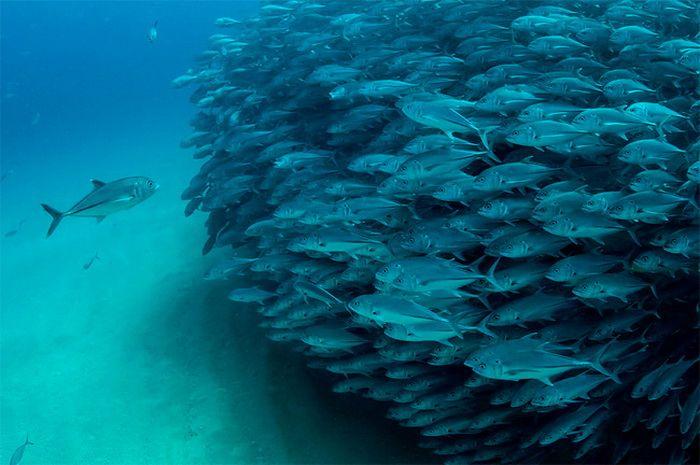 Рыбы глазами Octavio Aburto