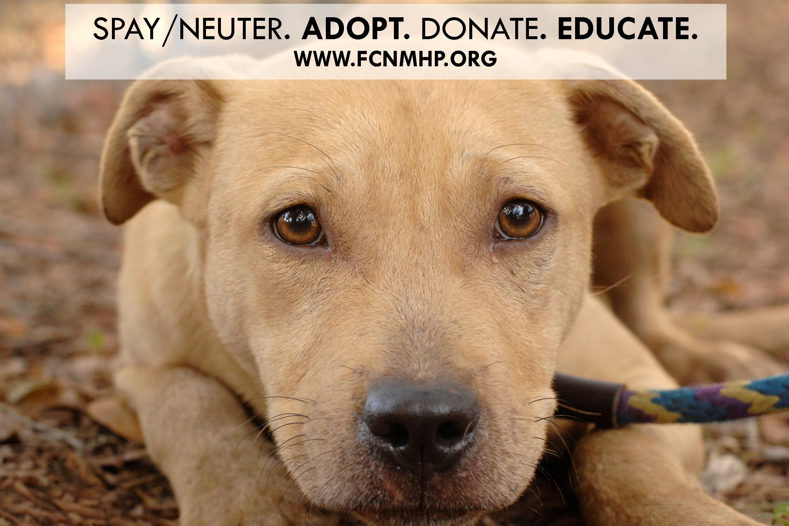 Spay Neuter Adopt First Coast No More Homeless Pets Www Fcnmhp