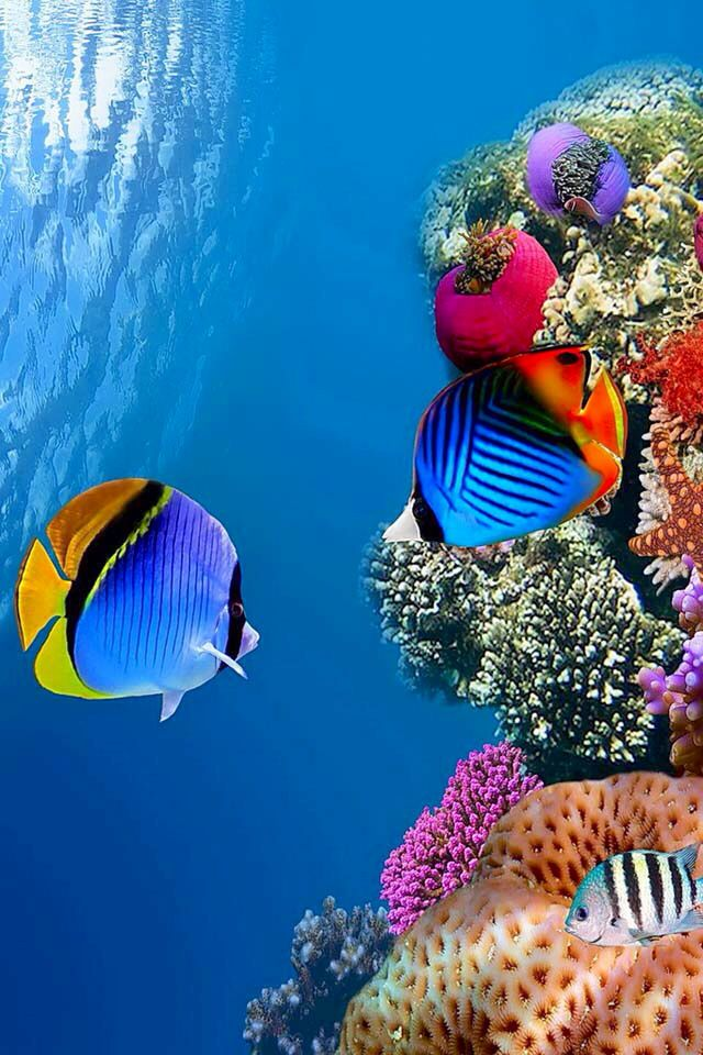 Epingle Par Jessica Greber Sur Under The Sea Animaux De La Mer Sous La Mer Animaux
