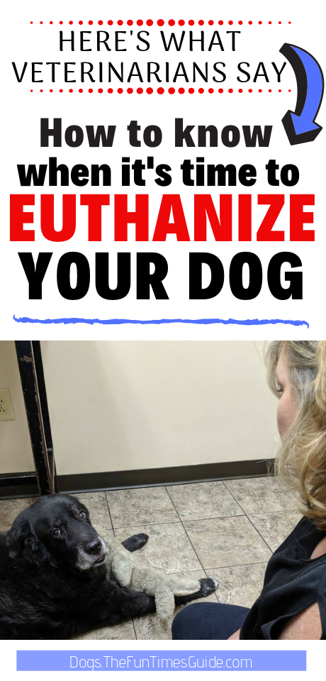 How Do You Know When It S Time To Euthanize Your Dog My Experience Personally And While Working For A Vet Putting Dog To Sleep Senior Dogs Care Your Dog