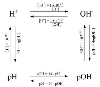 Ph Calculations Worksheet - worksheet