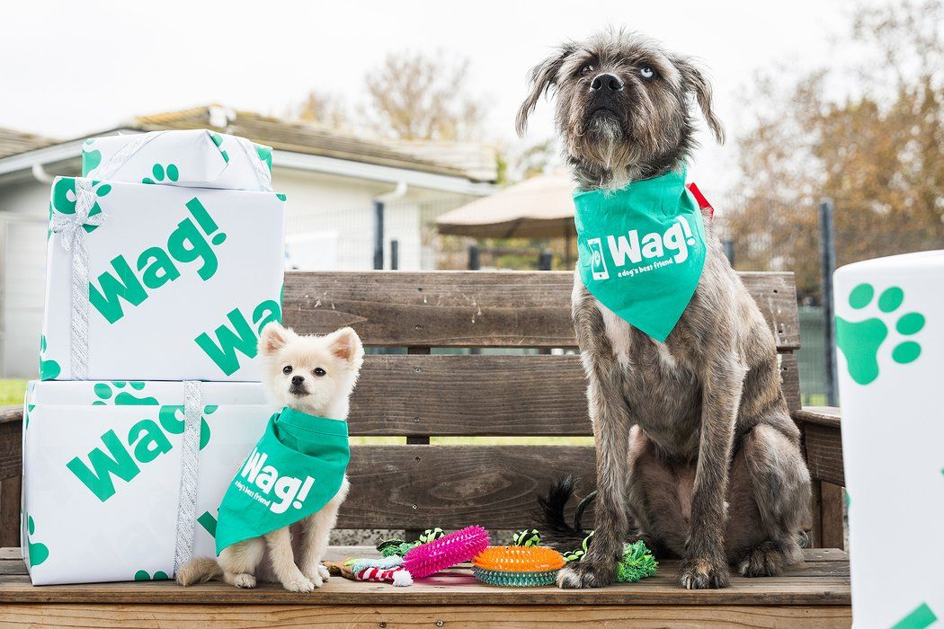 Popular OnDemand Dog Walking App 'Wag!' Gets Massive 300