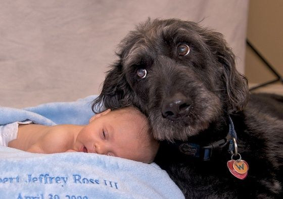 I love babies with dog photos. aww