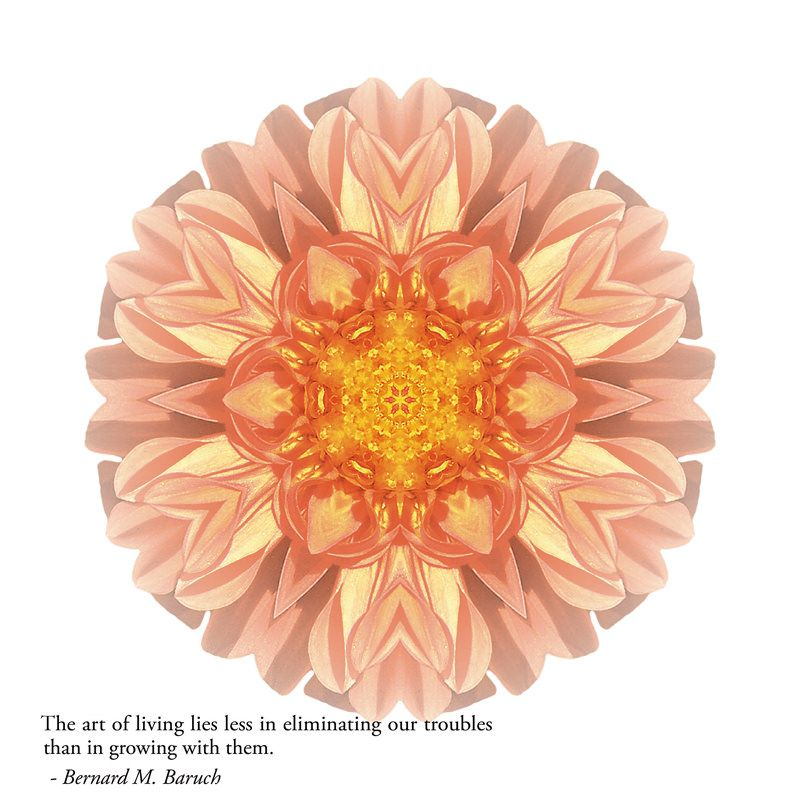 RESILIENCE: Find balance, build resilience, and expand your heart as you find your own path to wholeness, aided by this stunning blend of award-winning images, inspirational quotations, and potent reflections on our amazing human experience. © David J. Bookbinder #pathstowholeness #flowermandalas #flowermandala #flowers #flower #mandala #mandalas #spiritual #self-help #resilience
