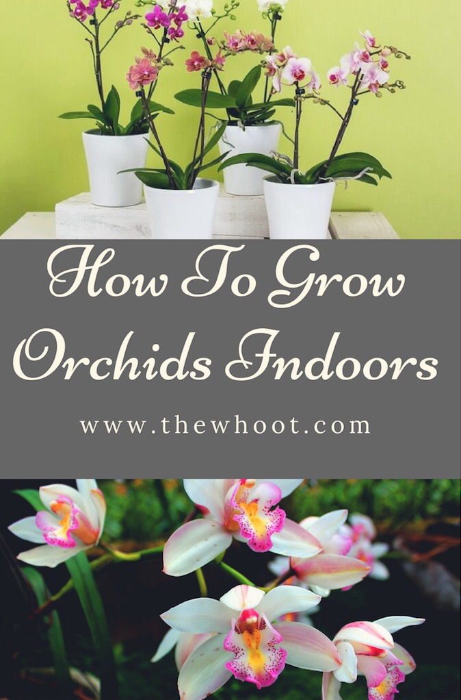 How To Grow Orchids Indoors A Guide For Beginners 400 x 300