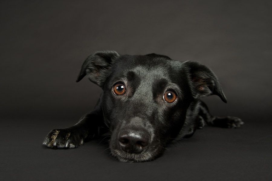 Studio Dogs Sarah Beth Photography Minneapolis Saint Paul