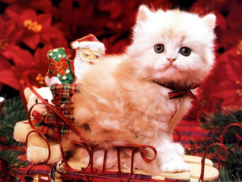 Cute Christmas Backgrounds Free Cute Christmas Desktop Backgrounds Christmas Animals Christmas Cats Christmas Kitten