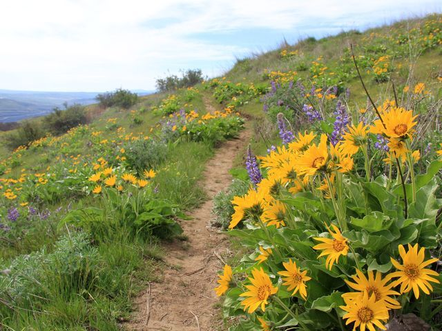 Top 5: Best easy wildflower hikes in the Columbia River Gorge
