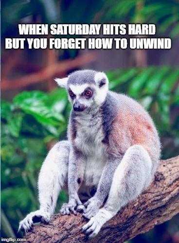 Sometimes it's hard to chill.. #HealthyDayToday #SiestaSaturday #memes #memesdaily #funnymeme #anima... - #chill #funnymeme #healthydaytoday #memes #memesdaily #siestasaturday #sometimes - #Lemur