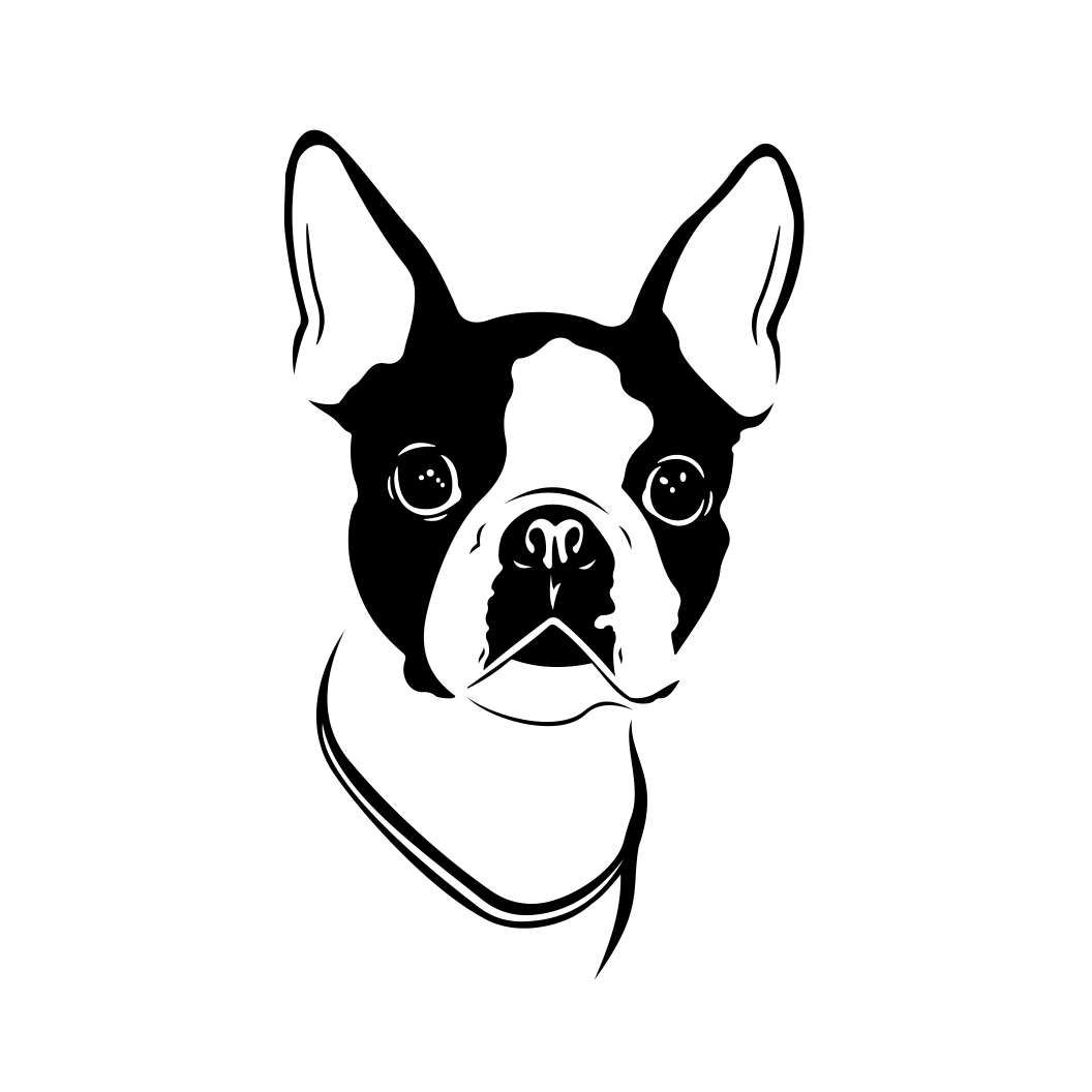 Boston Terrier Dog Graphics Svg Dxf Eps Png Cdr Ai Pdf Vector Art Clipart Instant Dow Boston Terrier Art Boston Terrier Art Illustrations Boston Terrier Tattoo