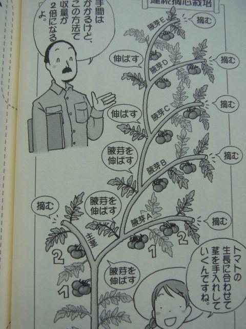 とまとの整枝 連続摘芯栽培 Flower Garden Life Hacks Green