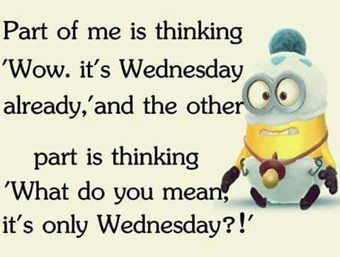 Only Wednesday Happy Wednesday Quotes Morning Quotes Funny Good Morning Funny