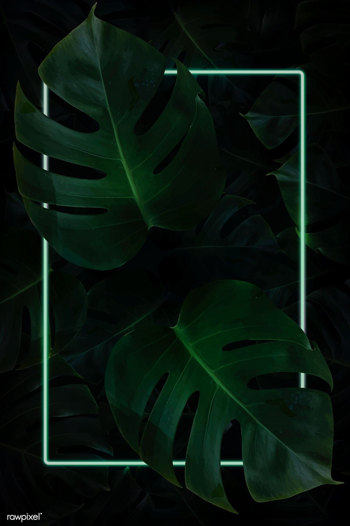 Rectangle Green Neon Frame On Tropical Leaf Background Vector 4k Iphone And Mobile Phone Wallpaper Flower Background Wallpaper Leaf Background Neon Wallpaper