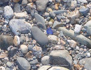A Beautiful Rare Piece Of Cobalt Blue Sea Gl Found On Secluded Beach In Isro Maine Seagl