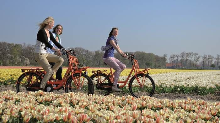 Renting A Bike Is The Ideal Way To Explore The Flower Strip At