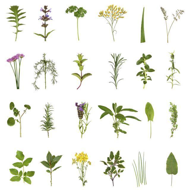 Como iniciar un jard n de hierbas si jardin pinterest jard n de hierbas hierba y jard n - Como empezar un jardin ...