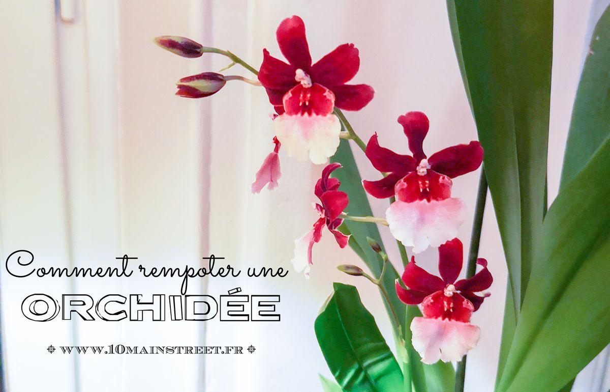 Comment S Occuper D Un Orchidée rempoter une orchidée pour avoir de jolies fleurs | rempoter
