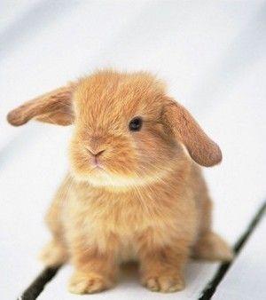 Technically.... I'm a bunny rabbit