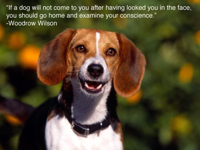 If a dog will not come to you,