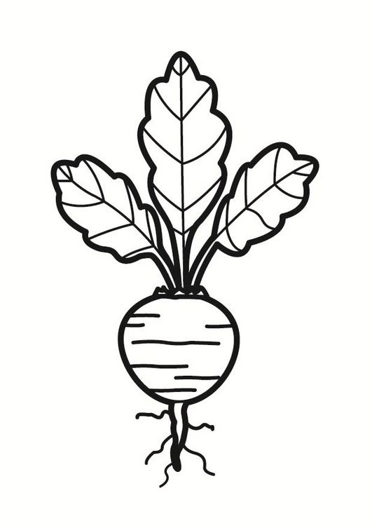 Coloring Page Beet Dm23230 Jpg 531 750 Pixels Coloring Pages