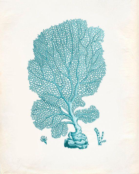 Vintage Sea Fan Coral Print 8x10 P195 | Fan coral, Coral ...
