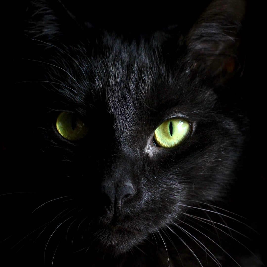 Pin By Kathy Hughes On C A T S National Black Cat Day Black Cat Pictures Black Cat Day