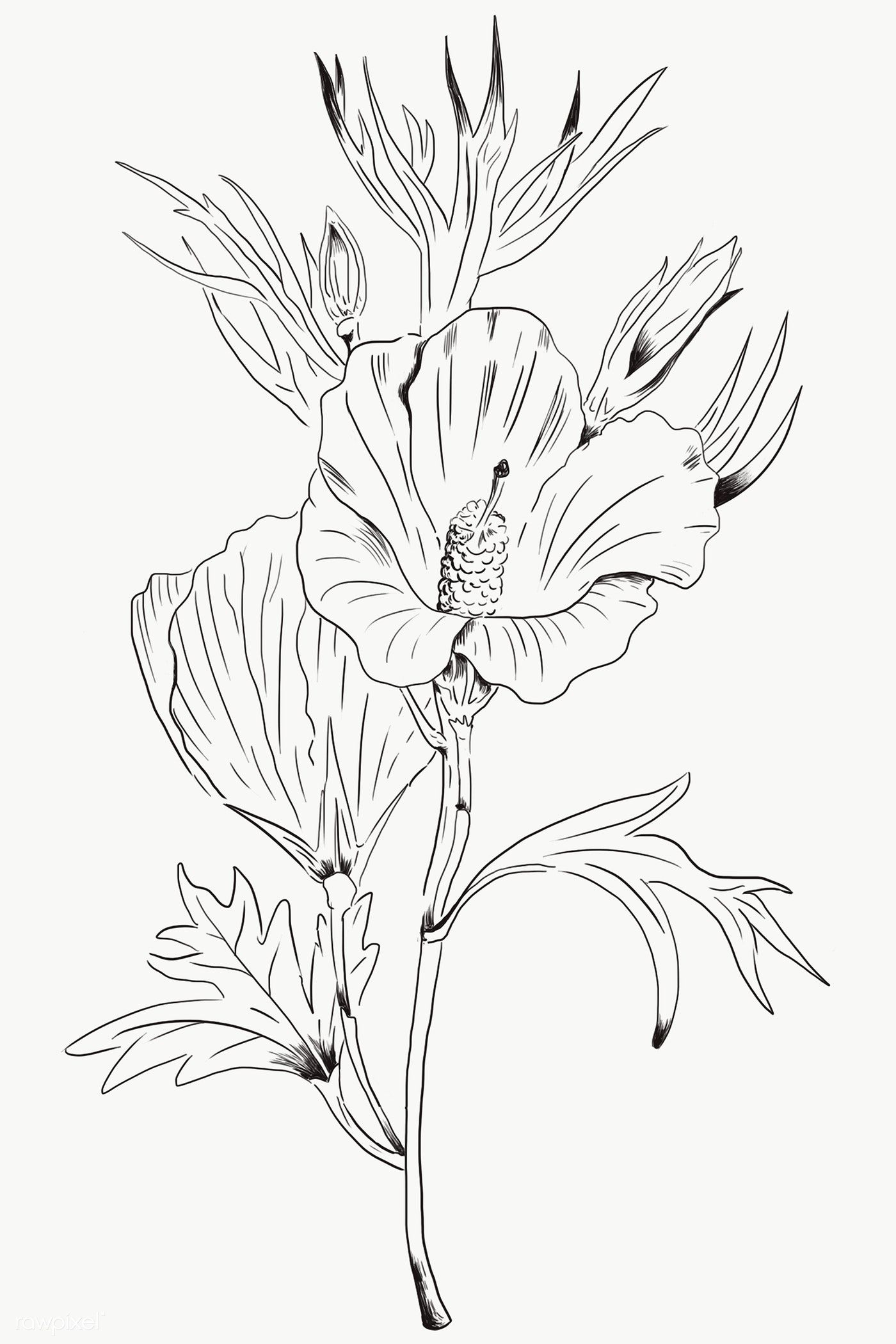 Hand Drawn Lilac Hibiscus Flower Transparent Png Free Image By