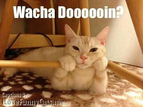 Whatcha Doin Cute Animals Funny Animal Pictures Crazy Cats