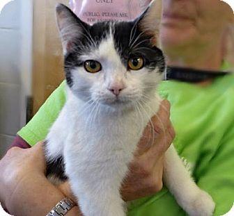 Kitten adoption, Cat adoption, Pets
