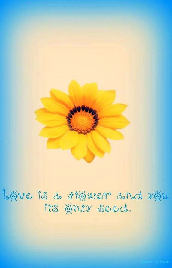 Love Is A Flower Quote Via Carol S Country Sunshine On Facebook Flower Quotes Beautiful Flower Quotes Bloom Quotes