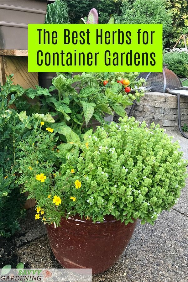 The 7 best herbs for container gardening #herbsgarden