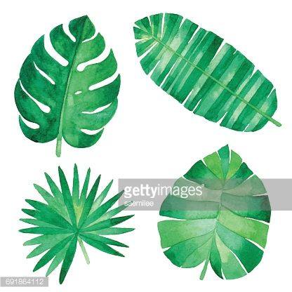 Vector Illustration Of Tropical Plants Leaf Wasserfarben