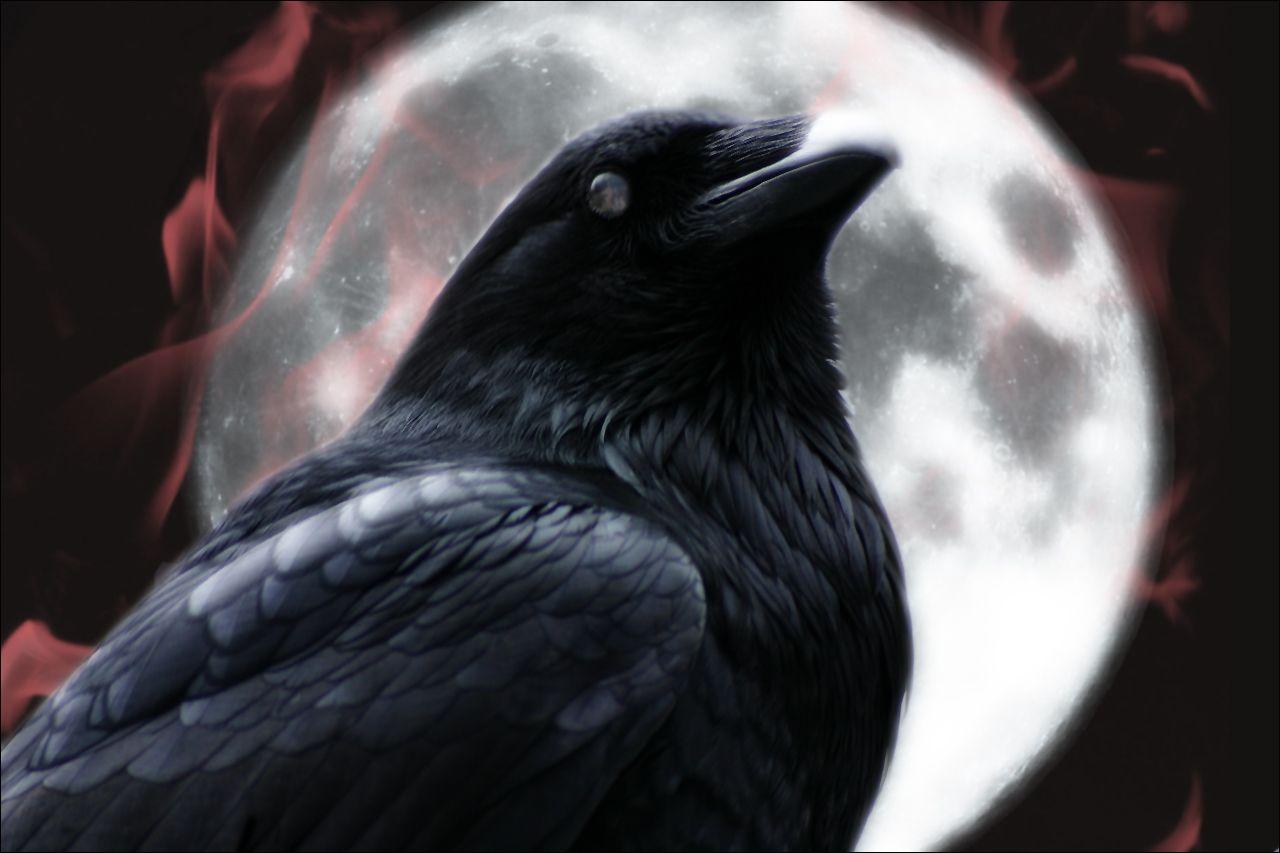 The Raven By Fleurdemai Deviantart Com On Deviantart With Images